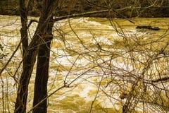Mason Creek al livello di piena immagine stock libera da diritti