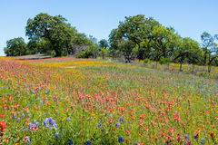 Mason Texas Wildflowers. Bluebonnets and Indian Paintbrush wildflowers line the road from Llano to Mason Texas stock image