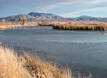 Mason Valley Wildlife Management Area. Wildlife management area in the Mason Valley, northern Nevada Royalty Free Stock Photo