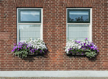Masonry brick wall with windows and flower boxes with flowering Stock Image