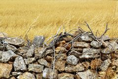 Masonry stone wall golden summer field Royalty Free Stock Photos