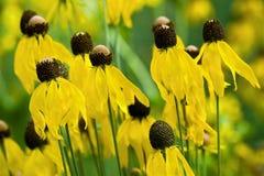 masowy kolor żółty Zdjęcia Royalty Free