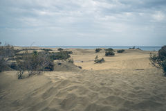 Maspalomas沙丘自然储备的看法,在大加那利岛,加那利群岛,西班牙 免版税图库摄影
