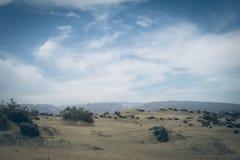 Maspalomas沙丘自然储备的看法,在大加那利岛,加那利群岛,西班牙 免版税库存照片