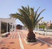 Maspalomas街道, Canarian海岛 库存照片