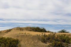 Maspalomas Duna - deserto in canarino Fotografie Stock Libere da Diritti