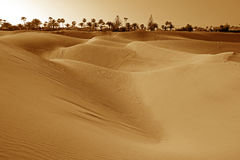 Maspalomas dunes Royalty Free Stock Photos