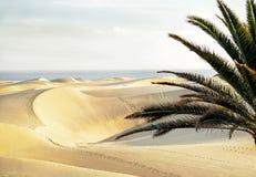 Maspalomas plaża z piaskowatymi diunami Gran Canaria, wyspy kanaryjska, Hiszpania kosmos kopii fotografia stock