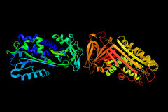Maspin ett protein som anmälas ursprungligen för att fungera som en tumörsup Royaltyfria Bilder