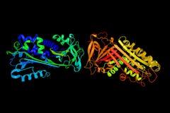 Maspin, une protéine a à l'origine fait rapport à la fonction comme petite gorgée de tumeur Images libres de droits