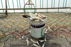 Mass dead fish taken out of lake collected in box on urban sidewalk.  Royalty Free Stock Images