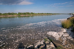 The mass death of fish in the state of Texas. The Colorado River Stock Image