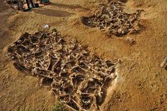 Mass grave of the Spanish Civil War (1936) Stock Photo