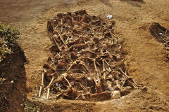 Mass grave of the Spanish Civil War (1936) Royalty Free Stock Image