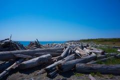 Driftwood Logs San Juan Island Stock Photo