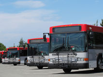 Mass Transit City Buses Parked Royalty Free Stock Photo