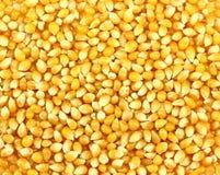 Grani del cereale Immagini Stock Libere da Diritti