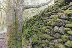 Massa's van mos op stenen en bomen in Wit Moss Walks, het Nationale Park van het Meerdistrict in het Zuid-Lake District, Engeland stock fotografie
