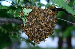 Massa van Bijen royalty-vrije stock afbeeldingen