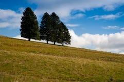 Massa van bomen met blauwe hemel en wolken Royalty-vrije Stock Afbeelding