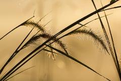 Massa van gras met druppeltjes, silhouetbeeld Stock Afbeeldingen