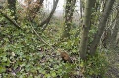 Massa van kleine bomen stock foto