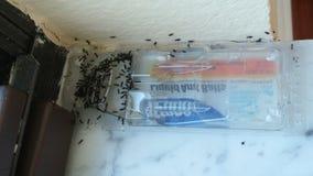Massacre de fourmi Photos stock