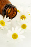 Massage oil from chamomile. Flower stock photography