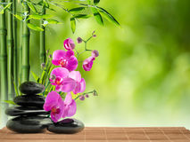 Massage with purple orchid and bamboo on water. Pink orchid black stone and bamboo stock photo