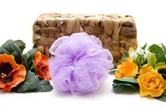 Massage sponge before phloem basket Stock Image