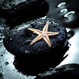 Massage stone and starfish Royalty Free Stock Image
