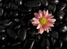 Massage stones Stock Photography