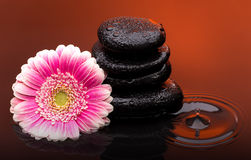 Massage stones with big flower and water drops Stock Photo