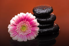 Massage stones with big flower and water drops Royalty Free Stock Photos