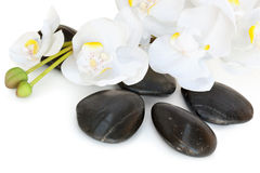 Massage Stones with Orchid. Spa treatment massage stones, with white orchid spray Royalty Free Stock Image