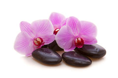Massage Stones with Orchid Stock Photography