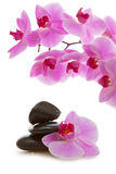 Massage Stones with Orchid Stock Images