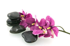 Massage stones with pink orchid. Isolated on white background stock photos