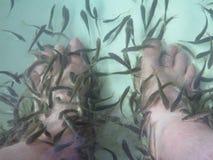 Massagem dos termas dos peixes Imagem de Stock