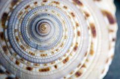 massagen för skönhethuvuddelelement mjölkar naturliga brunnsortstenar Royaltyfri Bild