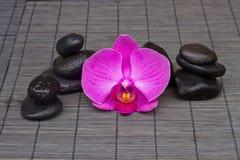 Massagestenar och orchid Royaltyfri Foto