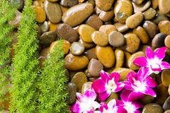 Massaggio della stazione termale della roccia della pietra della ghiaia Immagine Stock