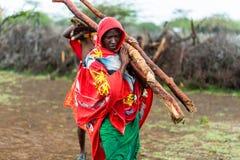 Massai man som samlar vedträ Royaltyfria Bilder
