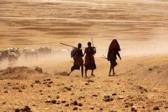 Massaijongens die koeien drijven om water te drinken royalty-vrije stock afbeelding