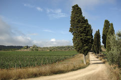 Massanera. Cypress road in tuskany Royalty Free Stock Image