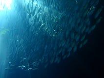 Masse der Fische in den Unterwassersunrays Lizenzfreie Stockfotos