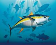 Masse des Gelbflossen-Thunfischs Stockbild