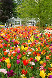 Massed variety of tulips. Mosaic of tulips, one of the many colorful displays of spring time bulb flowers in the world famous Keukenhof garden park in the stock photo