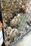 Massen beschmutzten Kaninchen in einem Käfig Stockbild