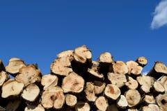 Massen-Stapel Aspen (Populus Tremuloides) Lizenzfreies Stockfoto